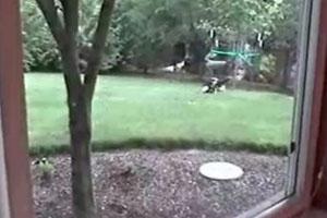 Bunny Escapes Cat