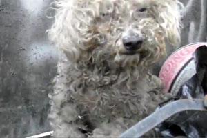 Sad Story Of A Dog