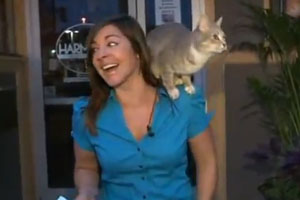 Cat Climbs Reporter On Air
