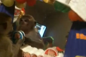 Monkey Got Scared By Itself