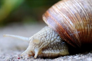 True Facts About Land Snails