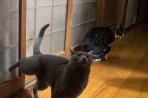 Knocking Cat