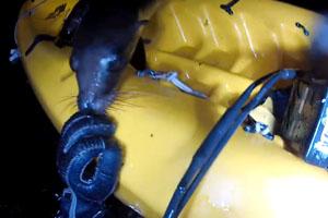 Sea Lion On The Kayak