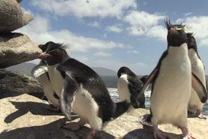 Penguin Fails