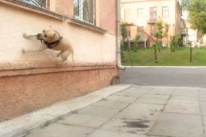 TreT Parkour Dog