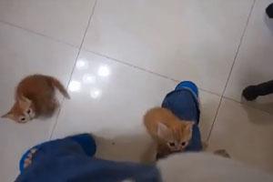 Kitten's Invasion