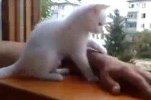 Overprotective Cat