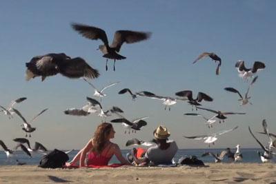 Crazy Bird Prank