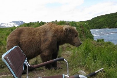 Incredible Encounter With An Alaskan Brown Bear