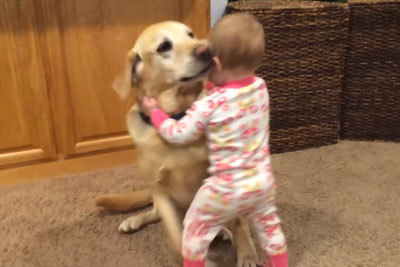 You Need To See This Cute Dogs And Adorable Babies Awesome Compilation