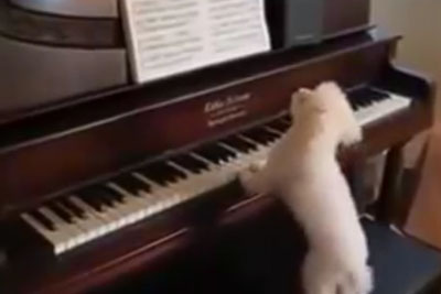 Tiny Rescue Dog Wants To Play A Song - When He Moves His Paw, My Jaw Dropped!