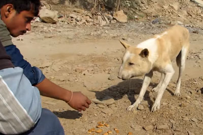 Street Dog Suffering From Huge Abscess Finally Gets Saved