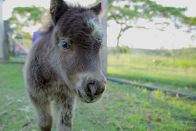 Tiny Foal Walks Up To The Camera - Try Not To Smile At This Incredible Display