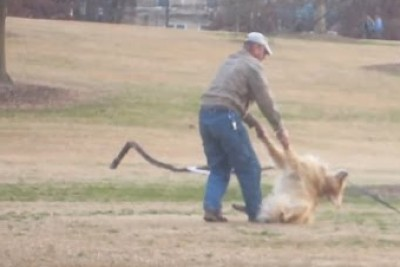 Dog Plays Dead So He Can Stay At The Park Longer