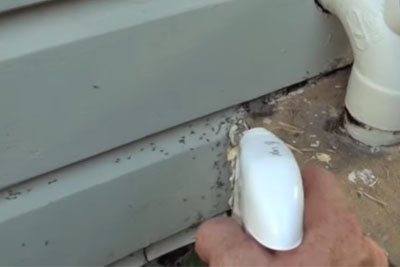 Ants Were Driving Him Crazy, Then He Found This Secret That Got Rid Of Them Overnight