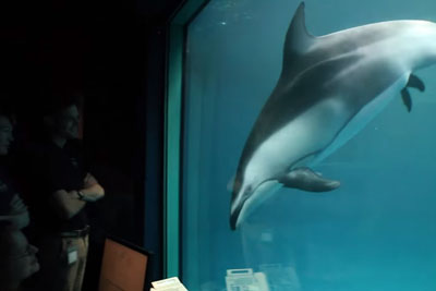 Dolphin Swims In Front Of Window, Then Staff Witnesses The Miraculous As It Glides By