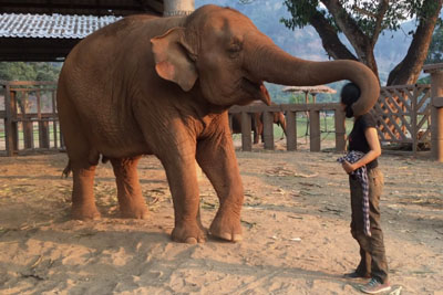 Even If She Is A Big Elephant, Every Time She Hears The Lullaby From This Woman She Falls Asleep