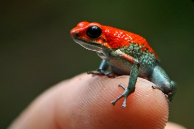 Guy From Brave Wilderness Channel Catches Deadly Poison Dart Frog