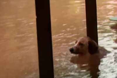 This Dog Was Chained To The Front Porch Of A Flooded House - See What News Crew Did