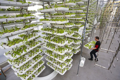 These Vertical Farms Could Be The Future Of Farming