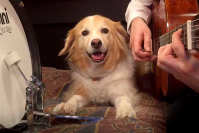 This Coolest Dog On The Earth Knows How To Play Drums