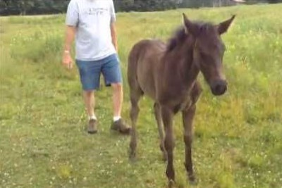 You Won't Believe What This Horse Always Wants When He Sees His Owner