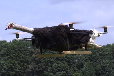 Cat Drone