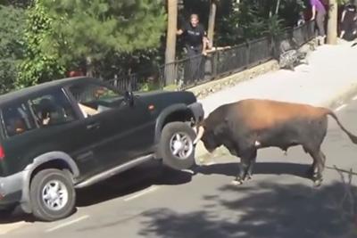 Runaway Bull Attacks A Car In Spain