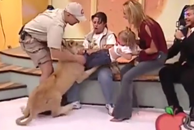 A Lion Attacked A Kid On Mexican TV