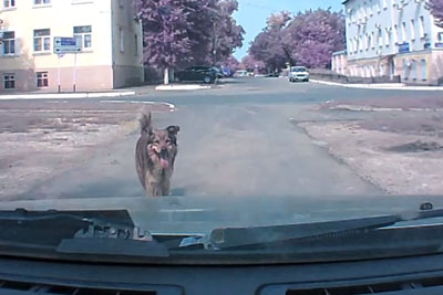 Psychic Dog Warns Driver Before Something Bad Happens