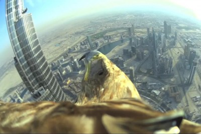 Amazing Eagle Dropped From The Highest Building in Dubai