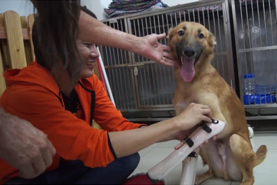 Dog Gets His Life Back With Custom-Made Prosthetic Limbs