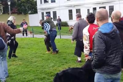 Man Kicks Dog In Duboce Park During Confrontation