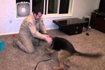 Dog Shares A Heartwarming Reunion With His Army Dad Who Just Came Home