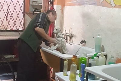 Pet Groomer Gets Secretly Filmed On The Job And Video Is Going Viral