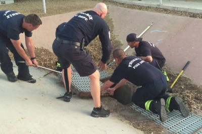 Firefighters Come Just To Save Trapped Ducklings Inside Shaft