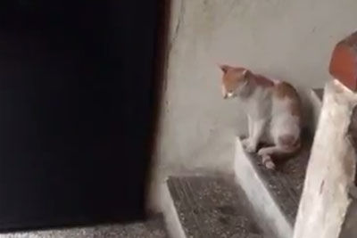 Is This The Most Polite Cat On The Whole World?