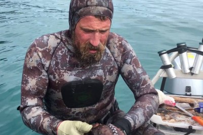 This Is How They Kill An Octopus In New Zealand