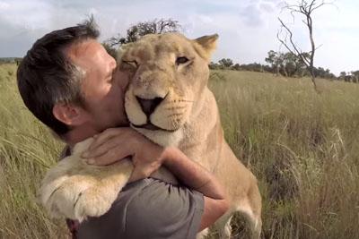 Man Cradles Head Of Massive Lion, Fulfilling Big Cat Fantasy Most Of