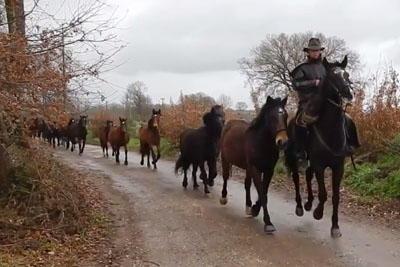 Everyone Is Falling In Love With This Video Of A Horseman Followed By Something Unexpected