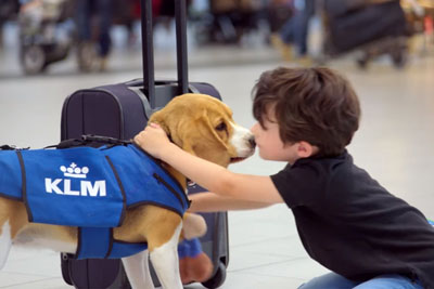 Watch A Puppy Return Lost Items To Passengers In Viral Ad For KLM Airlines