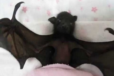 Maybe You Don't Like Bats But You Will Fall In Love With This One