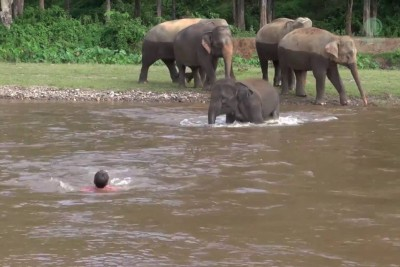 Elephant Comes To Rescue Man Trapped In Water