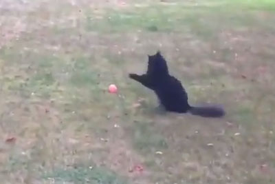 This Cat Has So Much Problems Chasing A Ball