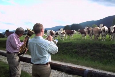 When Those Musicians Play Jazz, Every Cow Loves Their Music