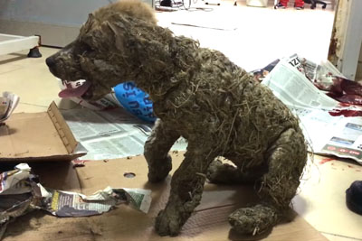 Kids Drowned This Dog In Glue Just For Fun - Watch How Good People Save His Life