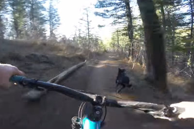 A Mountain Biker Races His Very Happy Pup Down A Trail, Struggles To Keep Up