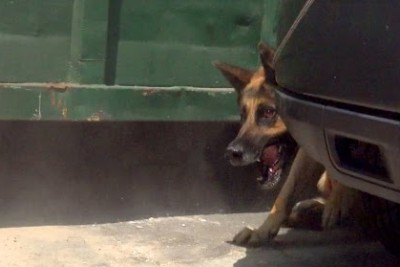 Security Guards Rush To Help Hope For Paws Rescue A Homeless German Shepherd