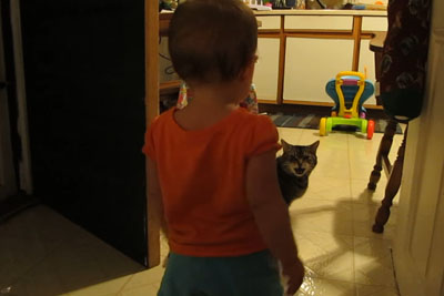 Dad Captures The Hilarious Morning Routine Between His Daughter And The Cat