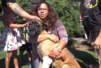 Injured Mastiff Gets Saved From The LA River, Then She Reunites With Her Family